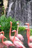 Ausflug Jurong Bird Park © Singapore Tourism Board